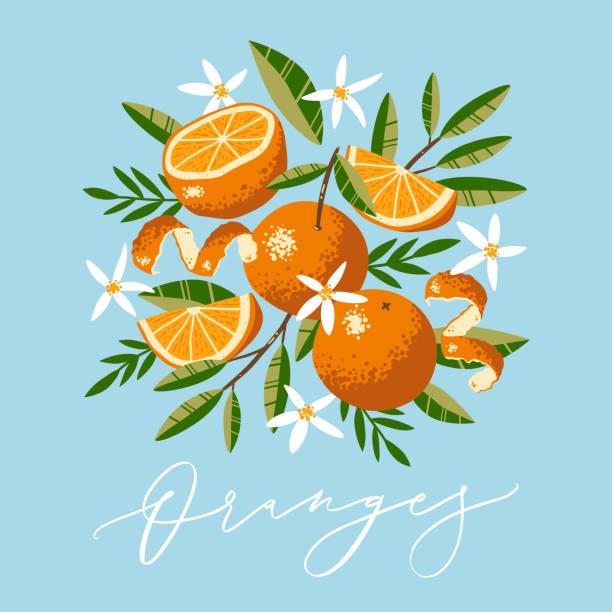 bildbanksillustrationer, clip art samt tecknat material och ikoner med vektor gratulationskort design med apelsiner, blommor och blad i handritad stil med vektor kalligrafi text. - apelsin