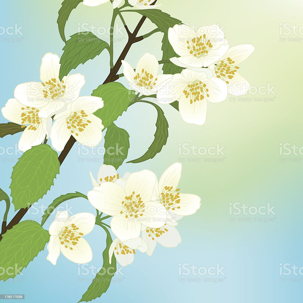 Vector greeting card with cherry blossom. royalty-free vector greeting card with cherry blossom stock vector art & more images of art