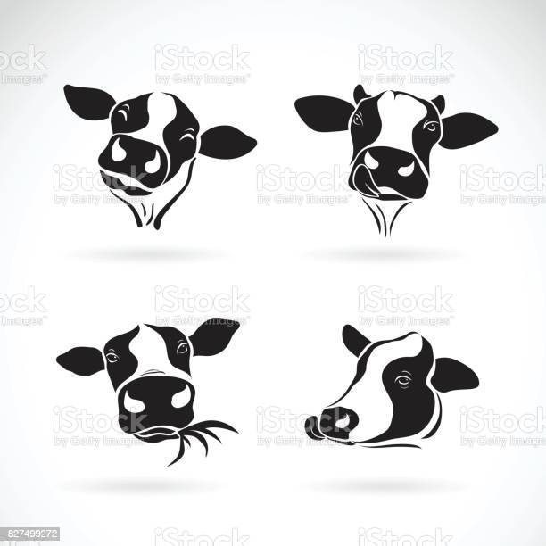Vector group of a cow head design on white background farm animal vector id827499272?b=1&k=6&m=827499272&s=612x612&h=vgipnvu4bwpumoomdgdumxlvaqgdqgrxcs90pigppka=