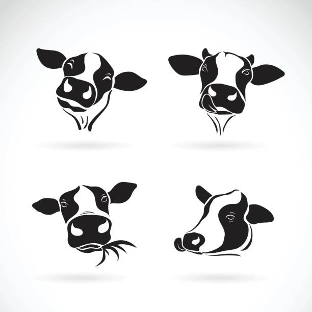 vector group of a cow head design on white background. farm animal. - cow stock illustrations, clip art, cartoons, & icons