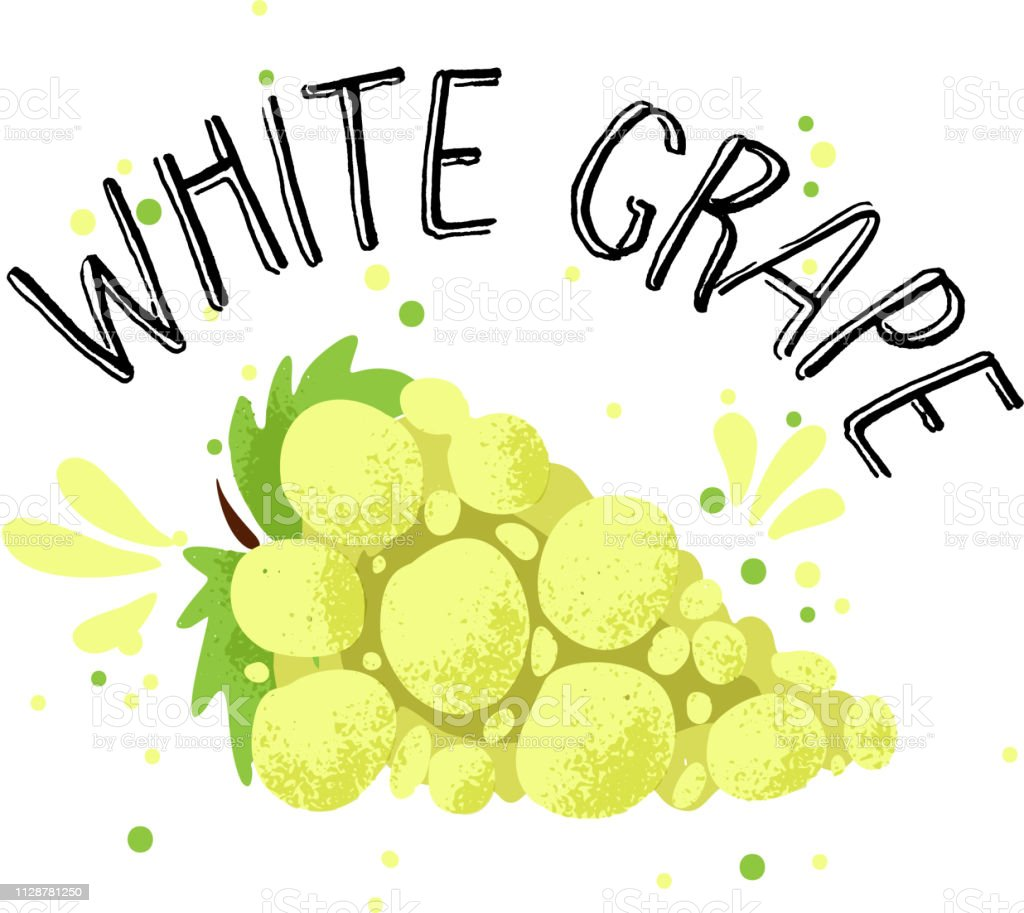 Vector hand draw white grape illustration. Yellow grapes with juice...