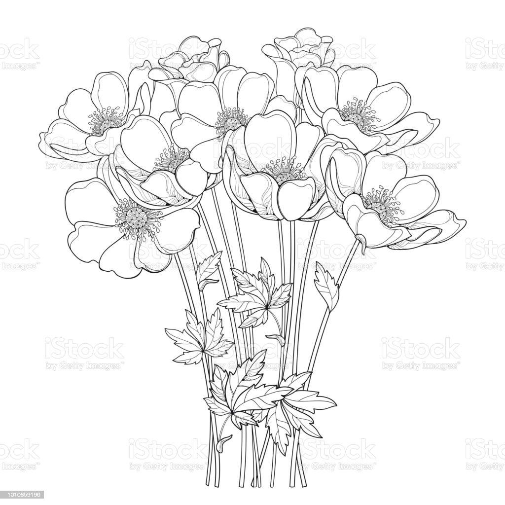 Bouquet Dessin De Vecteur Main Avec Contour Fleur Anemone Ou