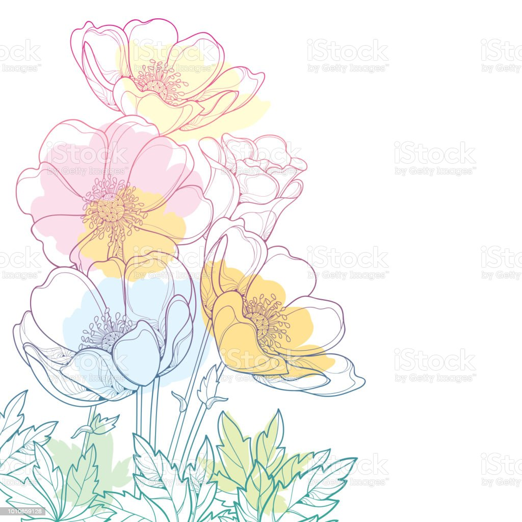 Vector hand drawing corner bouquet with outline anemone flower or vector hand drawing corner bouquet with outline anemone flower or windflower bud and leaf in izmirmasajfo