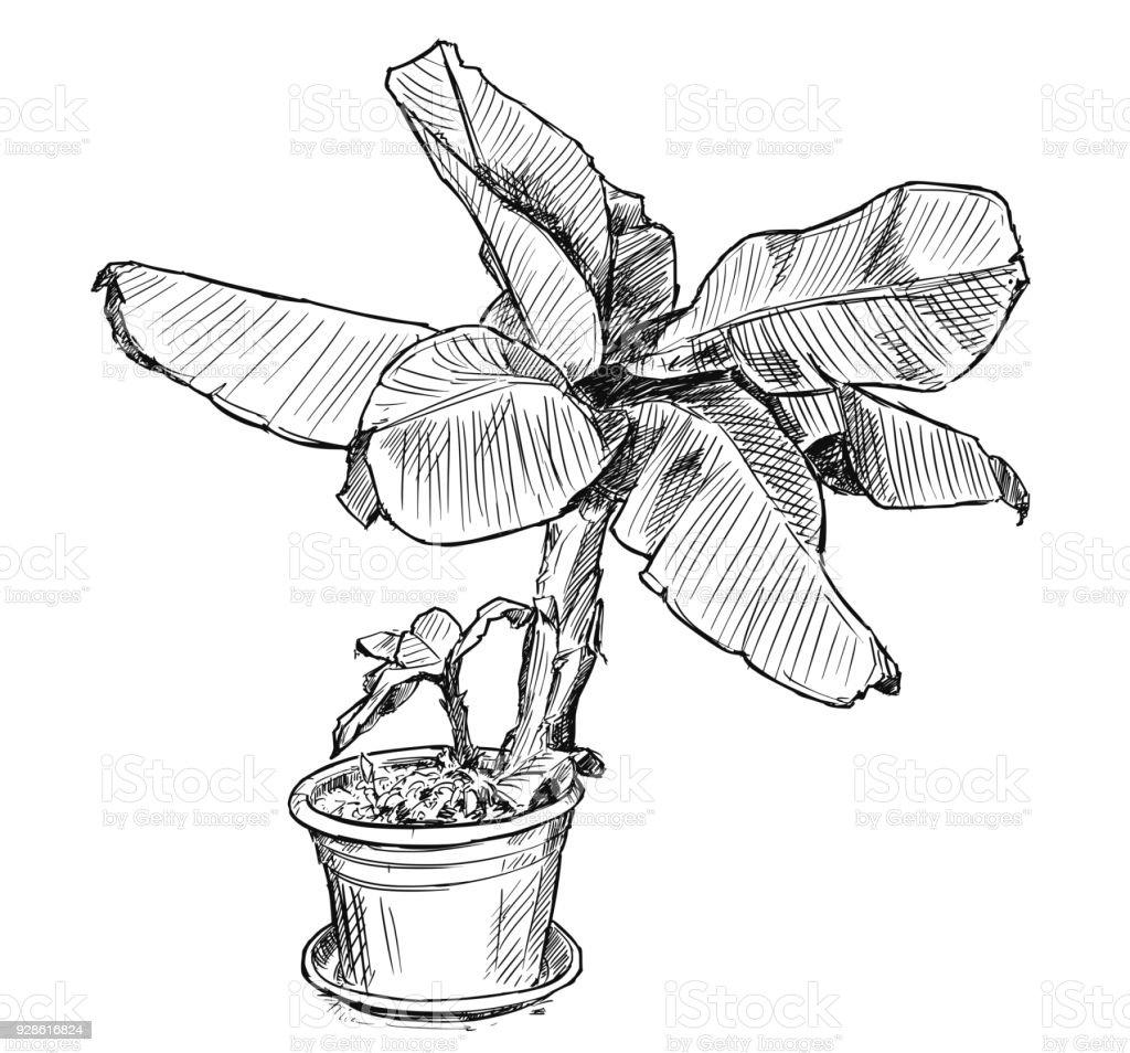 Vektor-Hand-Zeichnung der Bananenstaude in großen Topf – Vektorgrafik