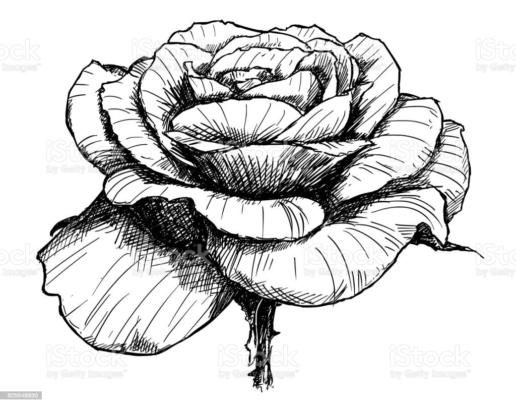 It's just an image of Luscious Flower Blooming Drawing