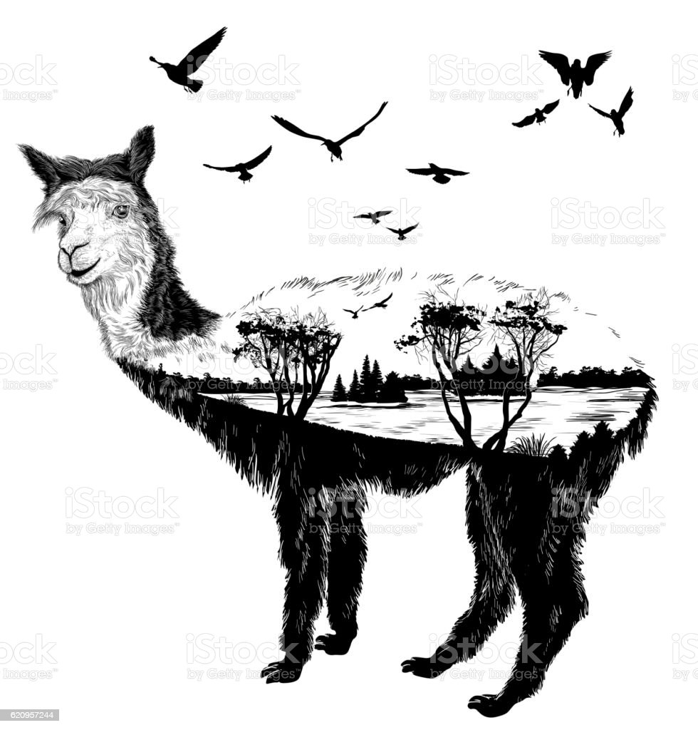 Vector Hand drawn alpaca for your design vector art illustration