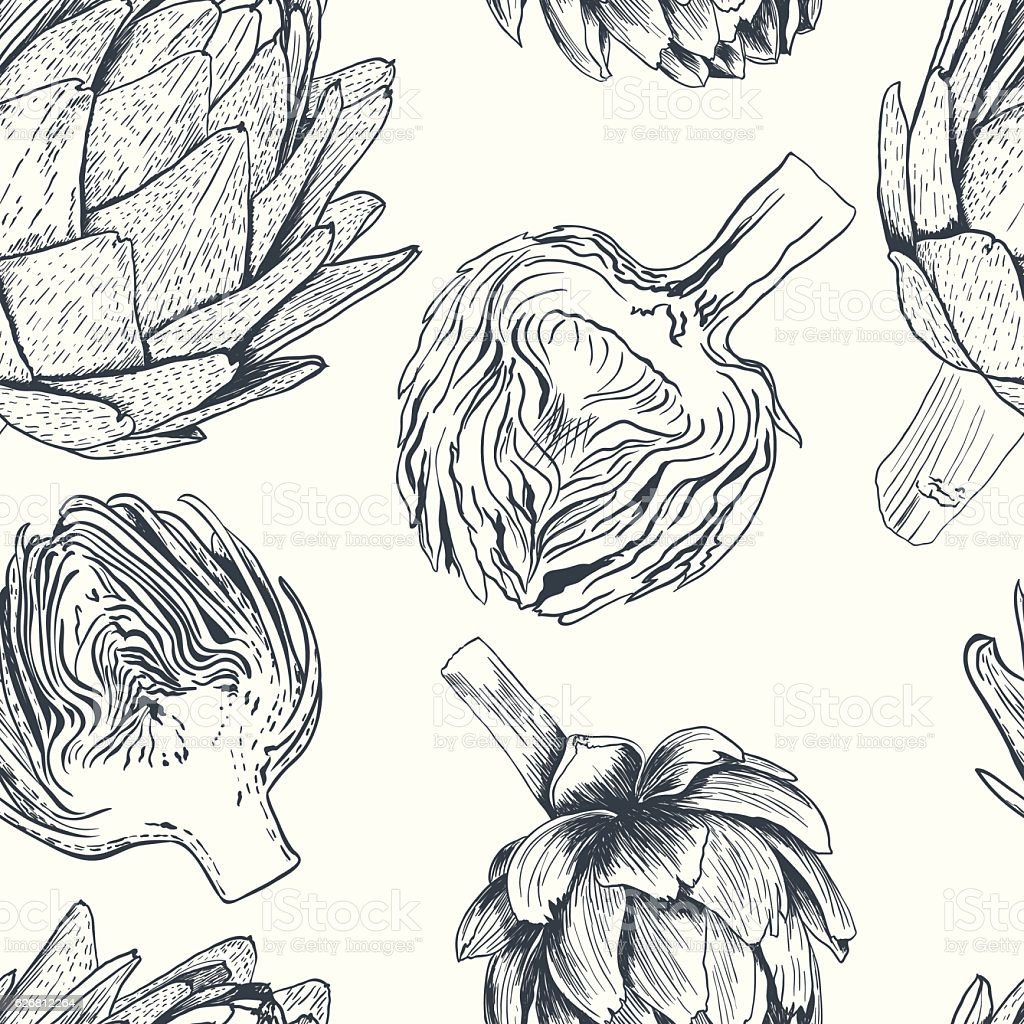 Vector hand drawn artichoke illustration. Food collection vector art illustration