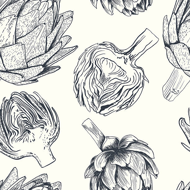 Vector hand drawn artichoke illustration. Food collection Vector hand drawn seamless artichoke illustration on white background artichoke stock illustrations