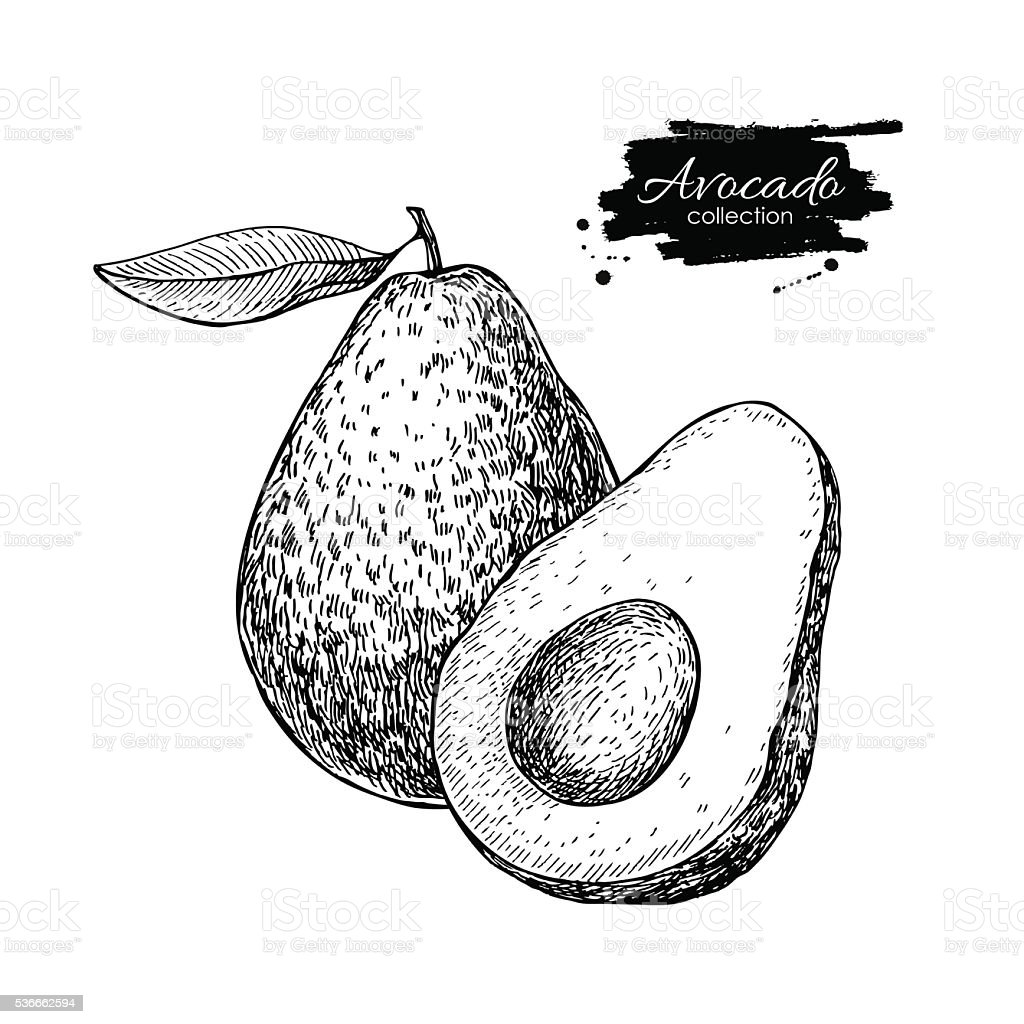 Vector hand drawn avocado and sliced pieces illustration. vector art illustration