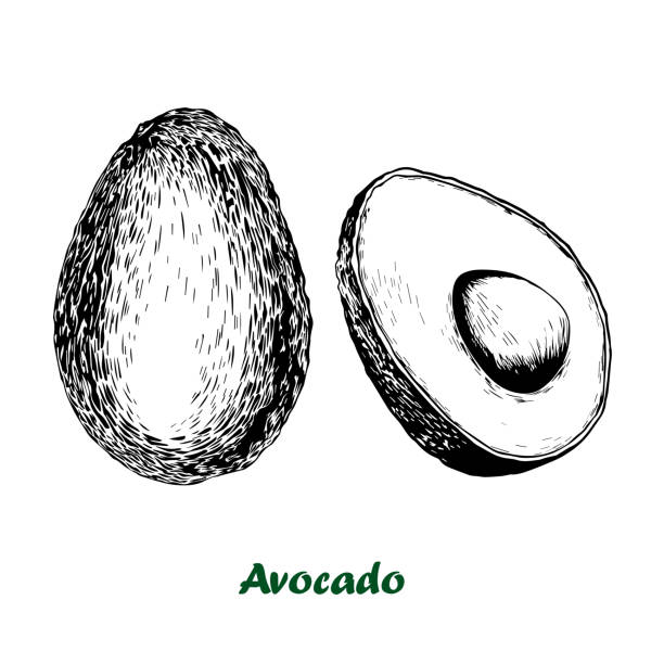 Vector hand drawn avocado set. Vector avocado set. Hand drawn illustration isolated on white background. avocado clipart stock illustrations