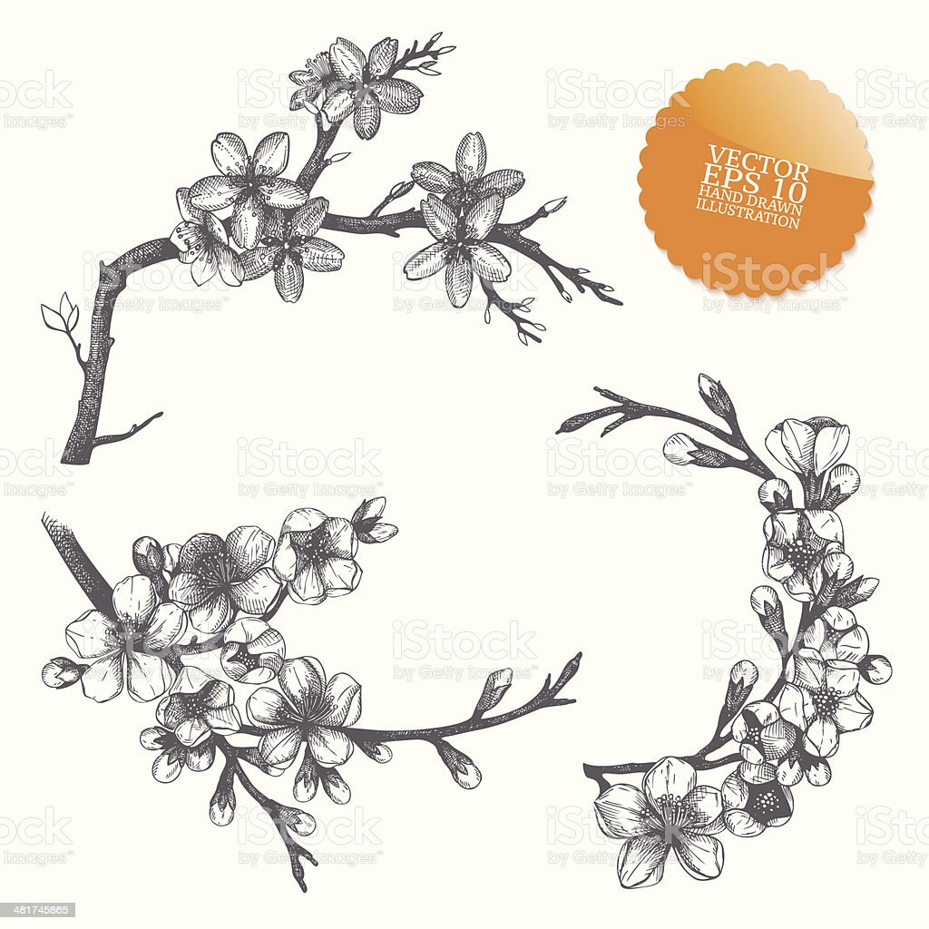 vector hand drawn blooming fruit tree twig royalty-free stock vector art