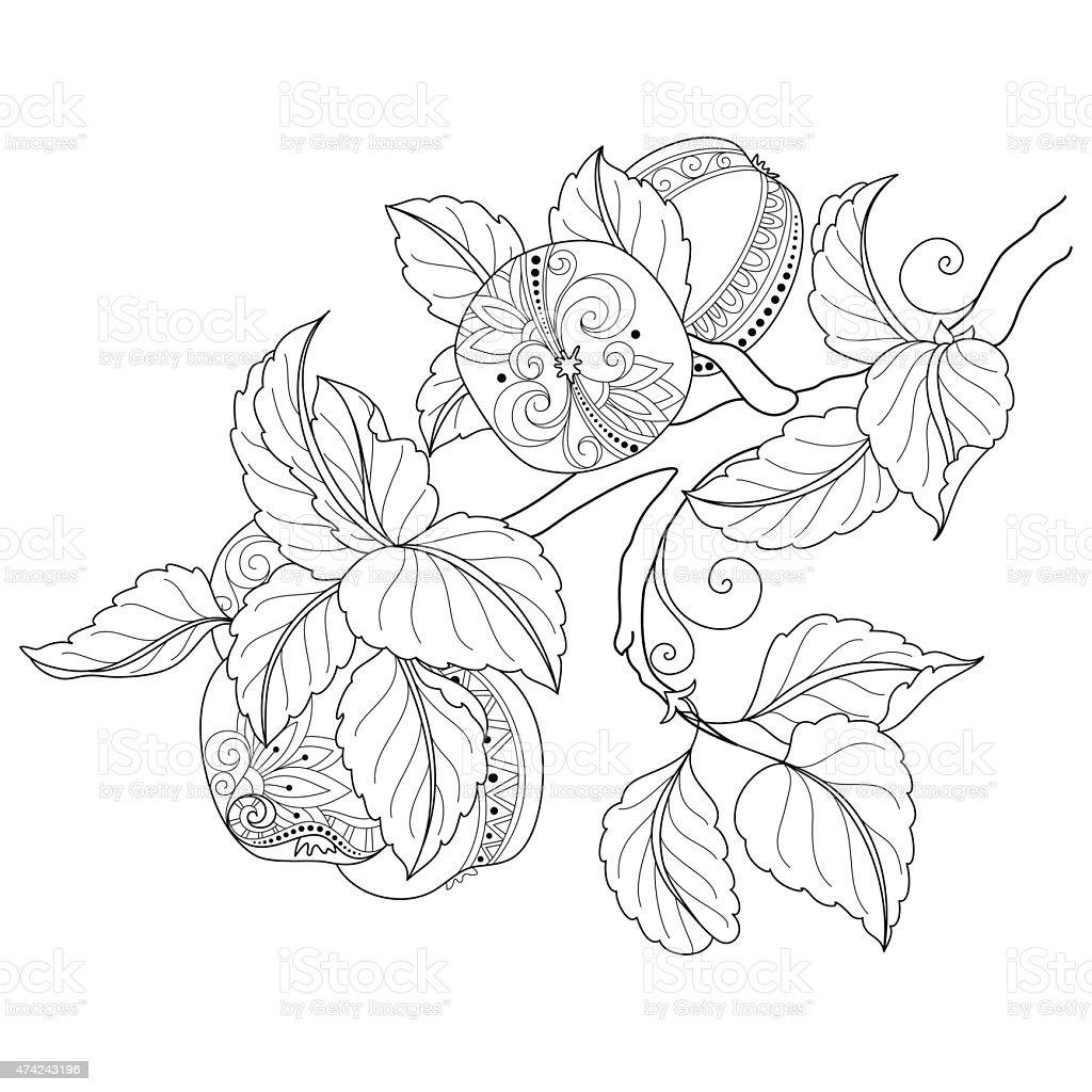 Vectores Dibujados A Mano Rama De árbol De Manzana Decorativos ...