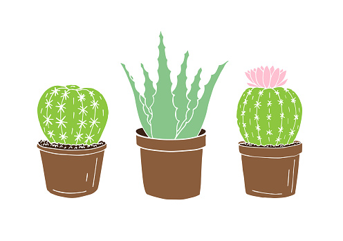 Vector hand drawn doodle sketch set of three colored cactus and aloe in pots