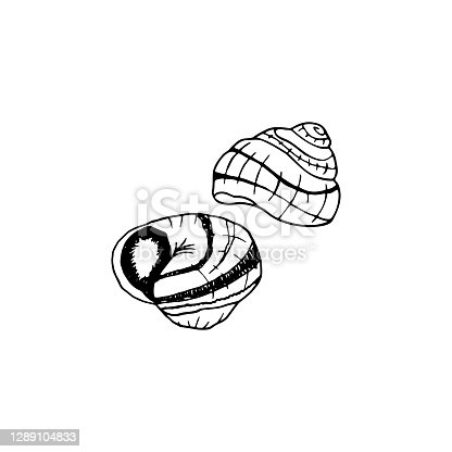 istock Vector hand drawn escargot. French cuisine dish of snails. Design sketch element for menu cafe, bistro, restaurant, label and packaging. Illustration on a white background. 1289104833