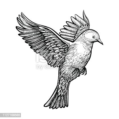istock Vector hand drawn flying pigeon. 1127166565