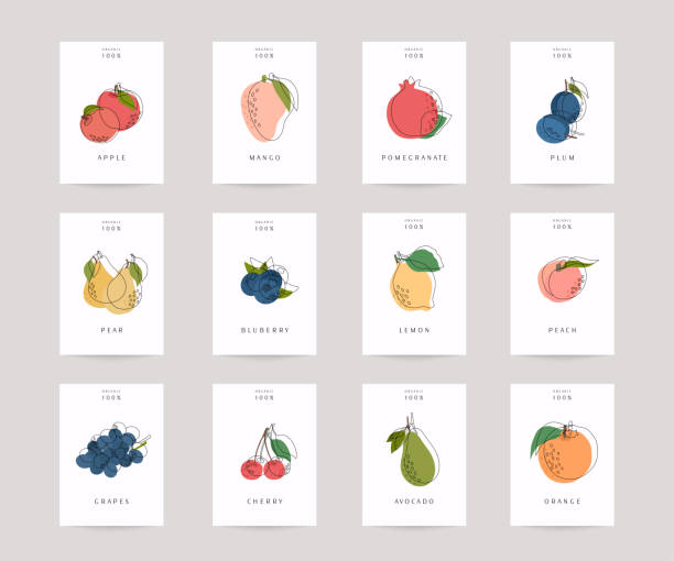 Vector hand drawn fruits posters. Eco foods. Colorful vector icons' set of fruits and vegetables. Vector hand drawn fruits posters. Eco foods. Colorful vector icons' set of fruits and vegetables. avocado borders stock illustrations