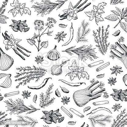 Vector hand drawn herbs and spices background or pattern illustration. Spice ingredient pattern, aroma herbal natural drawing