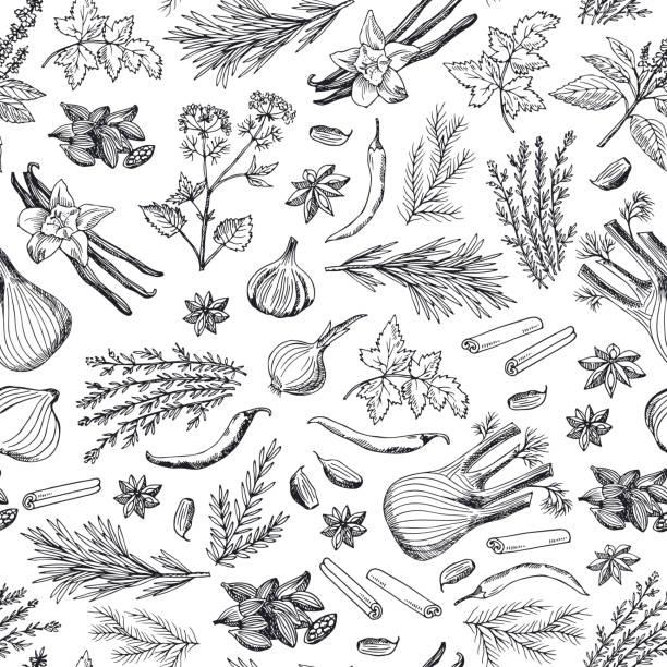 wektor ręcznie rysowane zioła i przyprawy tło lub wzór ilustracji - liść mięty przyprawa stock illustrations