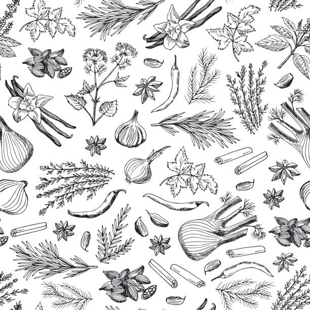 vector hand drawn herbs and spices background or pattern illustration - лекарственная трава stock illustrations