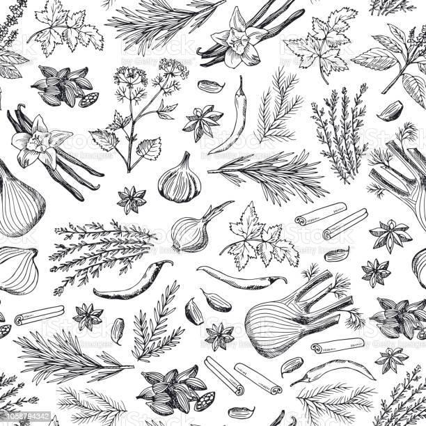 Vector Hand Drawn Herbs And Spices Background Or Pattern Illustration - Arte vetorial de stock e mais imagens de Alecrim