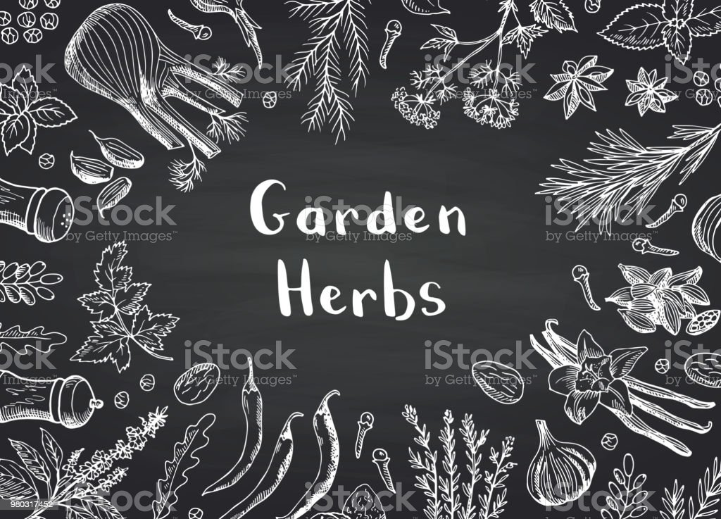 Vector hand drawn herbs and spices on black chalkboard background with place for text illustration vector hand drawn herbs and spices on black chalkboard background with place for text illustration - immagini vettoriali stock e altre immagini di aglio - alliacee royalty-free