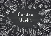 Vector hand drawn herbs and spices on black chalkboard background with place for text illustration. Organic spice white on blackboard, sketch leaf drawing