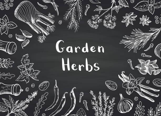 ilustrações, clipart, desenhos animados e ícones de vetorial mão desenhada ervas e especiarias sobre fundo negro lousa com lugar para ilustração de texto - ingredientes