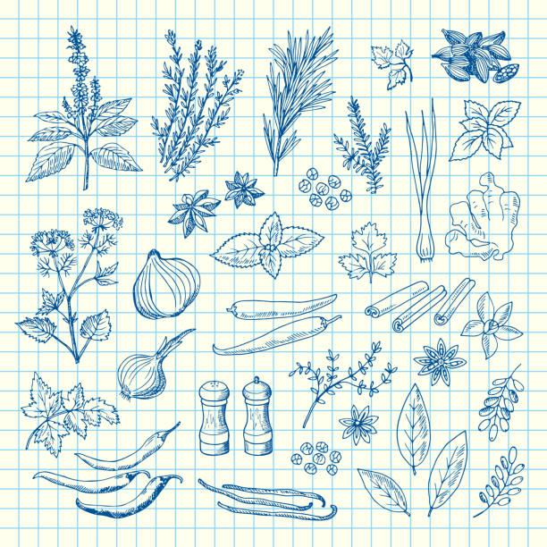 벡터 손으로 그린 셀 시트 그림에 허브와 향신료 - 바닐라 양념류 stock illustrations