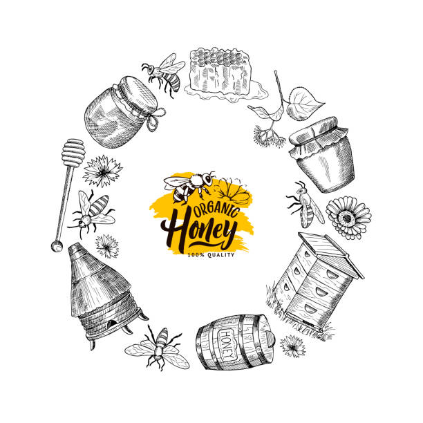 Vector hand drawn honey elements in circle form Vector hand drawn honey elements in circle form with place for text in center isolated on white illustration bee borders stock illustrations