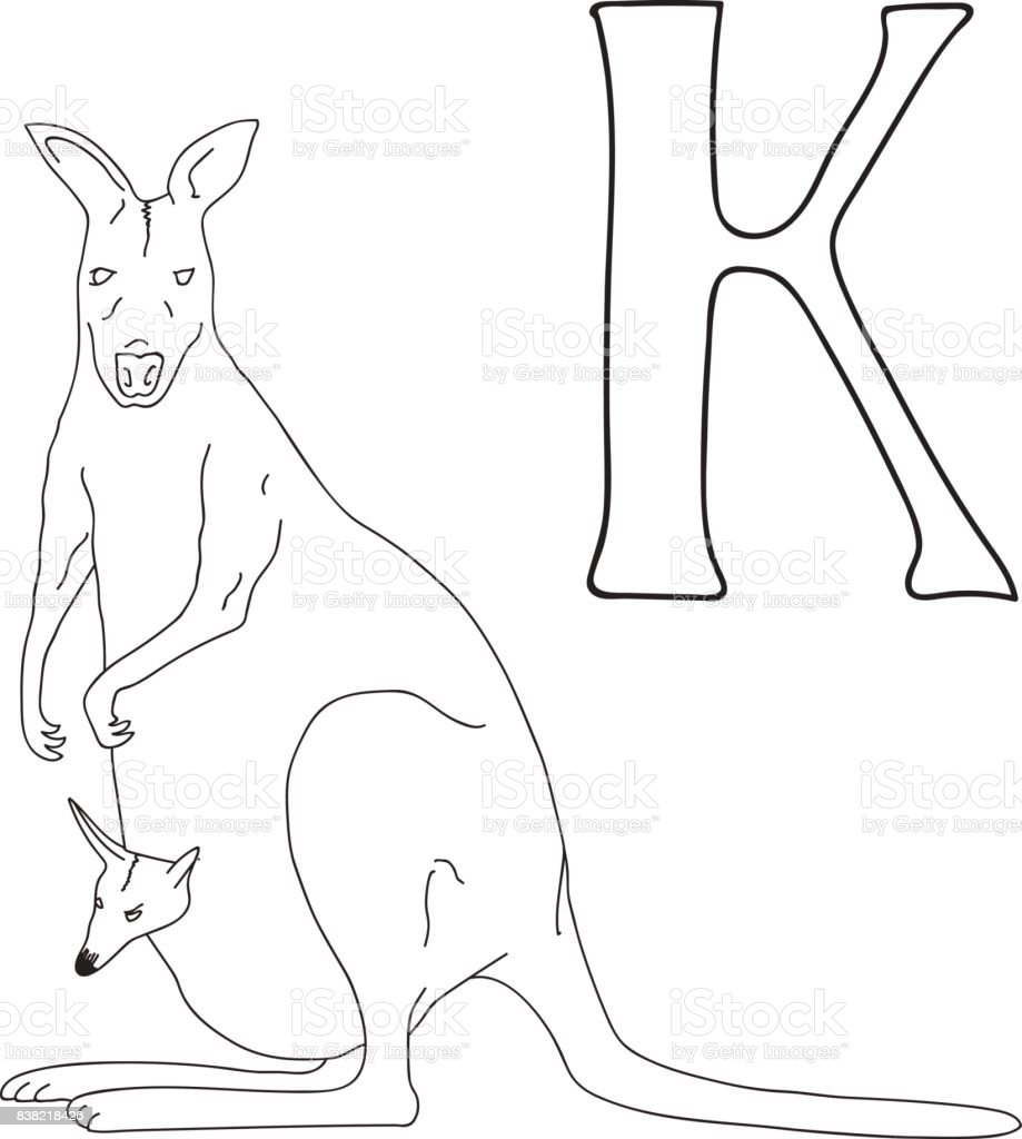 Vector Hand Drawn Illustration Capital Letter K On Alphabet Card Black And White Realistic Kangaroo