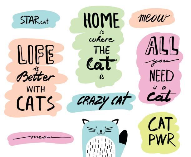 ilustraciones, imágenes clip art, dibujos animados e iconos de stock de vector dibujado a mano letras citas sobre gatos. tipografía de doodle inspiración para tarjetas, flyers, carteles, folleto. - tipos de letra y tipografía