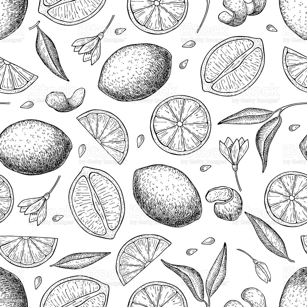 Vector hand drawn lime and lemon seamless pattern. vector art illustration