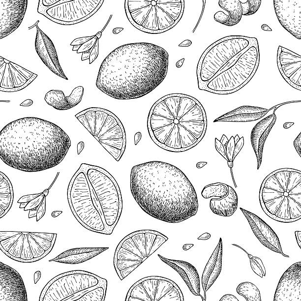 Vector hand drawn lime and lemon seamless pattern. Vector hand drawn lime and lemon seamless pattern. Tropical summer citrus fruit engraved style background. Detailed food drawing. Great for summer decor or detox program lime stock illustrations