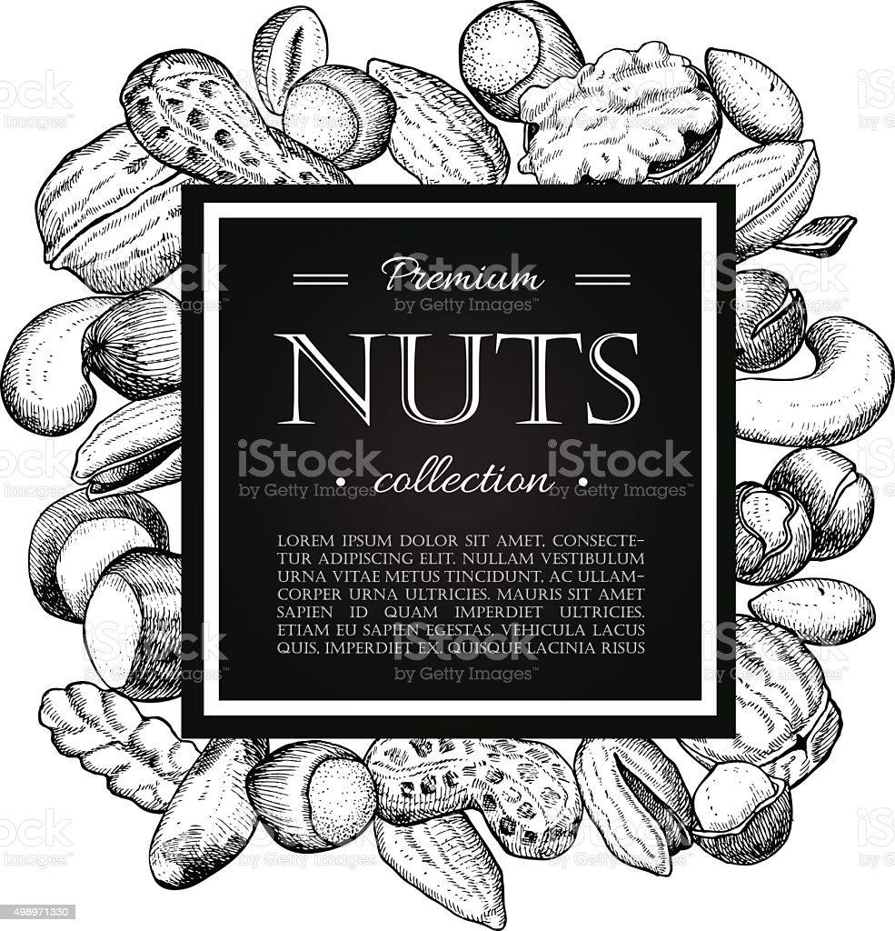 Vector hand drawn nuts illustration. Engraved vector art illustration