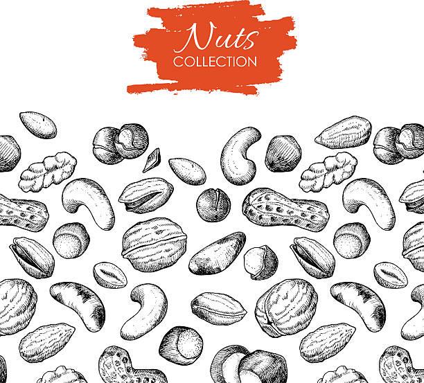 wektor ręcznie narysowane orzechy ilustracja. - nuts stock illustrations