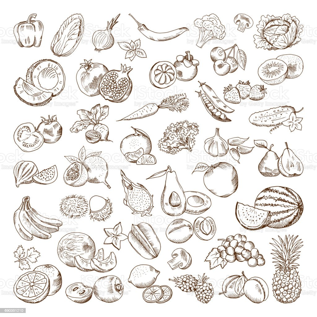 Vector hand drawn pictures of fruits and vegetables. Doodle vegan food illustrations - illustrazione arte vettoriale