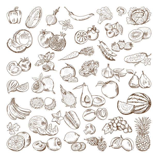 Vector hand drawn pictures of fruits and vegetables. Doodle vegan food illustrations vector art illustration