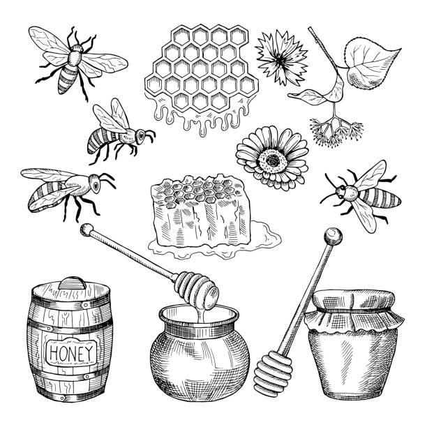 Vector hand drawn pictures of honey products Vector hand drawn pictures of honey products. Illustration of honey healthy natural food bee clipart stock illustrations