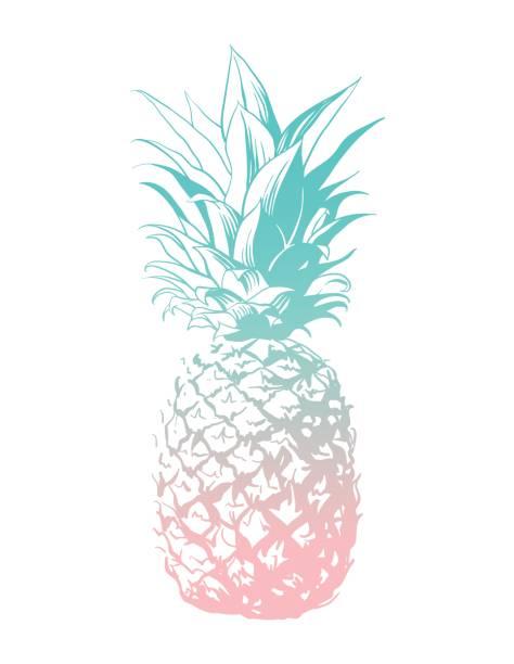 illustrazioni stock, clip art, cartoni animati e icone di tendenza di vector hand drawn pineapple. - ananas