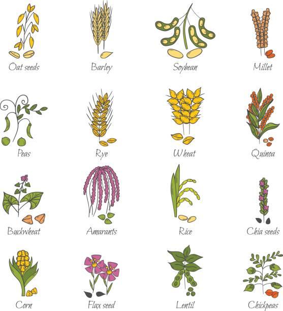 ilustrações de stock, clip art, desenhos animados e ícones de vector hand drawn porridge and cereals objects - quinoa