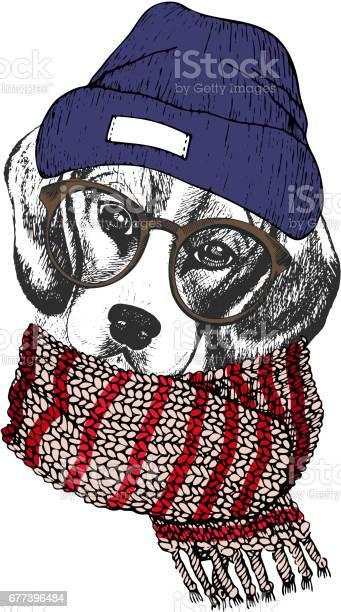 Vector hand drawn portrait of cozy winter dog beagle wearing knitted vector id677396484?b=1&k=6&m=677396484&s=612x612&h=52uxdxshkiczlwskcmvwlwstdn6sgsec3pvckbq88ho=