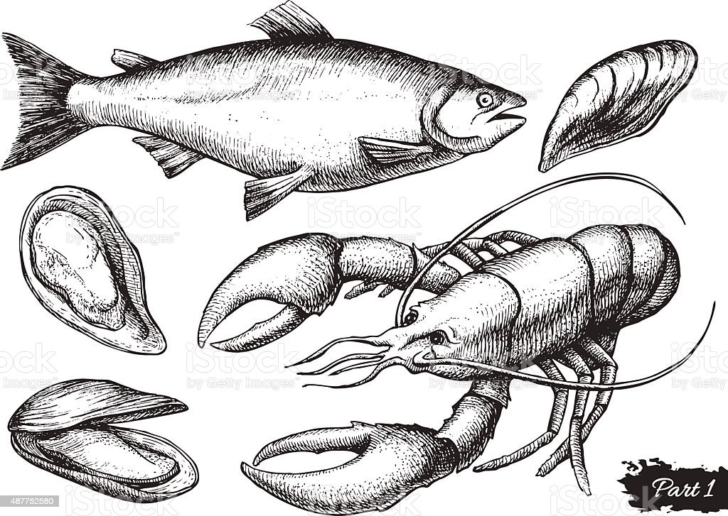 Vector hand drawn seafood set. Vintage illustration vector art illustration