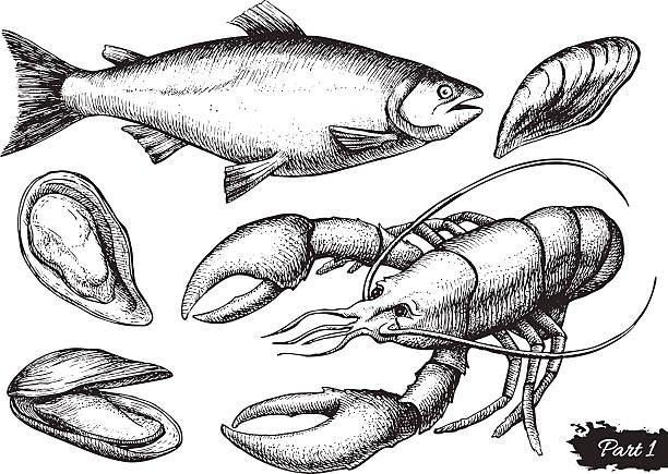 Vector hand drawn seafood set. Vintage illustration vector art illustration