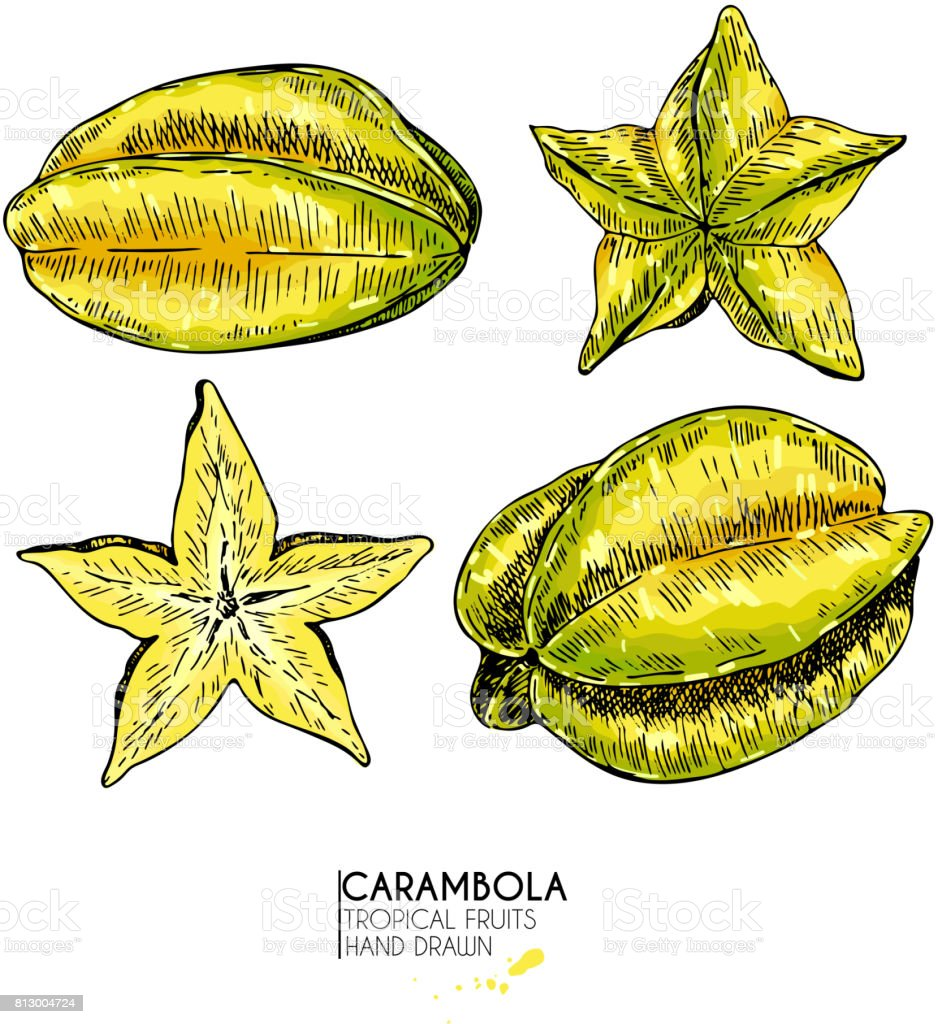 Vector hand drawn set of exotic fruits. Isolated carambola slices, and whole. Engraved colored art. Delicious tropical vegetarian objects. vector art illustration