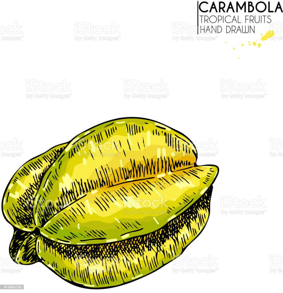 Vector hand drawn set of exotic fruits. Isolated whole carambola. Engraved colored art. Delicious tropical vegetarian objects. vector art illustration