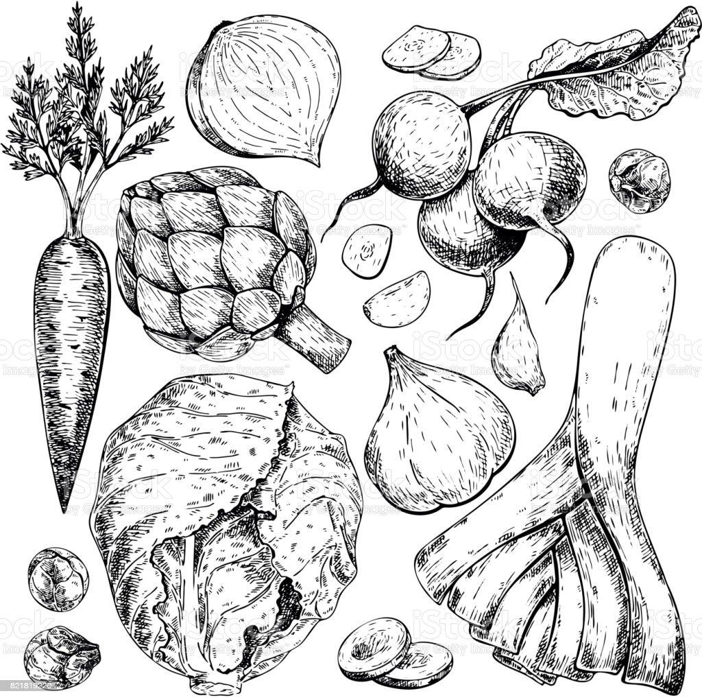 Vector hand drawn set of farm vegetables. Isolated carrot, articoke, leek, radish, cabbage, garlic. Engraved art. vector art illustration