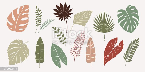 Vector hand drawn set of various silhouette branches with abstract tropical leaves. botanical element collection with Earth tone color.
