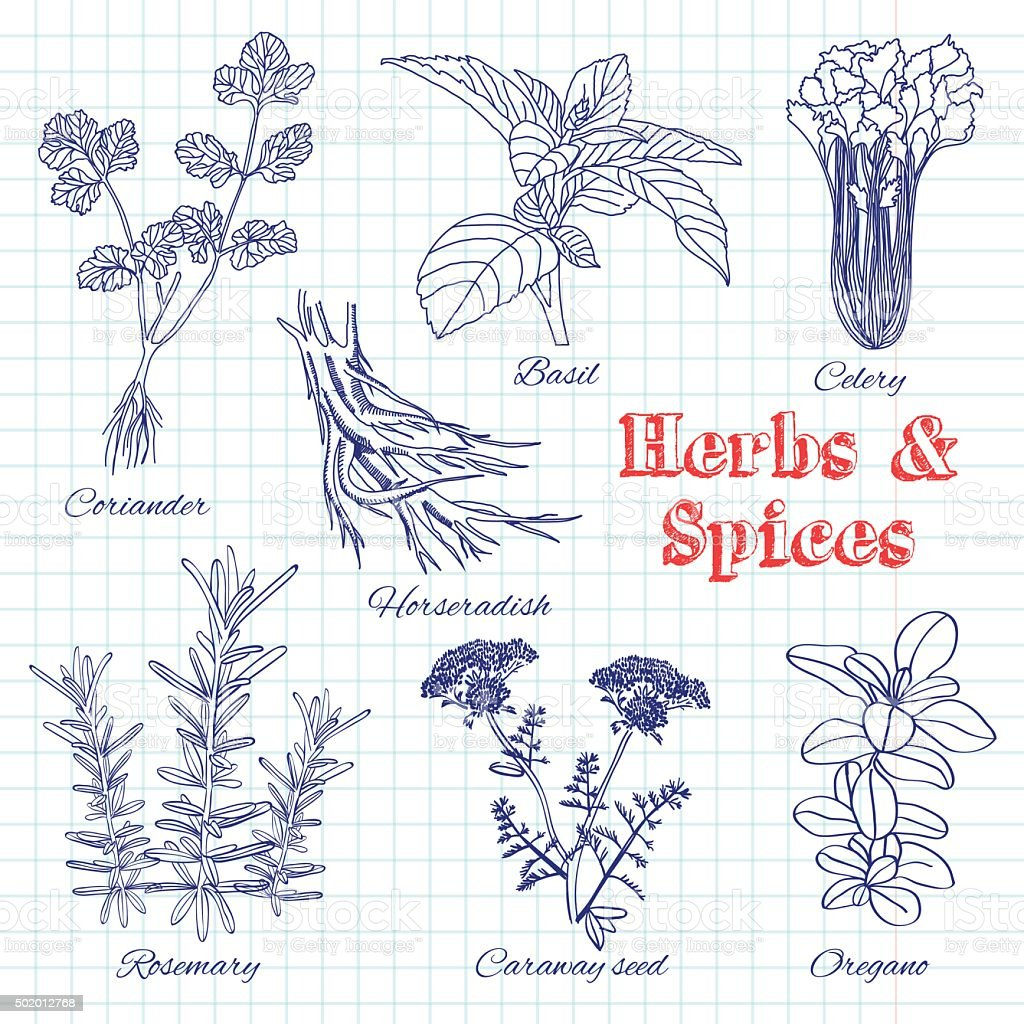 Vector hand drawn set with Herbs and Spices. vector art illustration