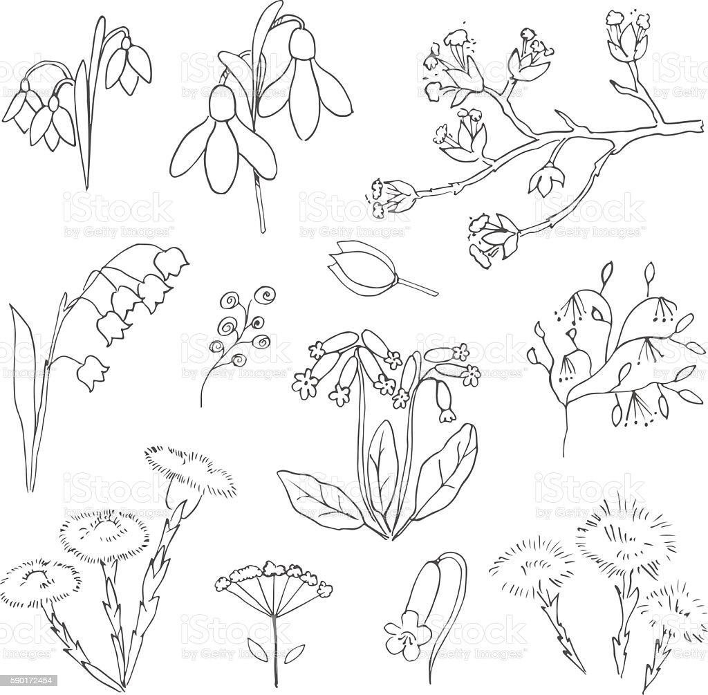 Line Drawing Spring Flowers : Vector hand drawn spring flower illustration set stock