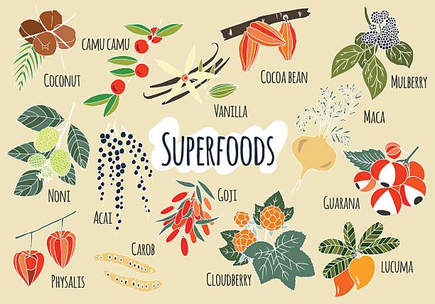 illustrations, cliparts, dessins animés et icônes de vecteur main tirés des produits superfoods. - antioxydant